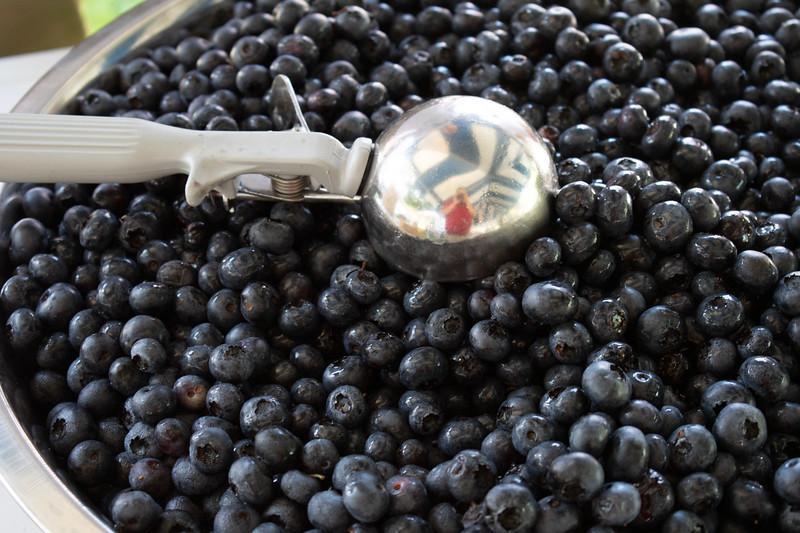 Blueberry_Festival-8456.jpg