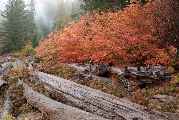 Stampede Pass October 2009