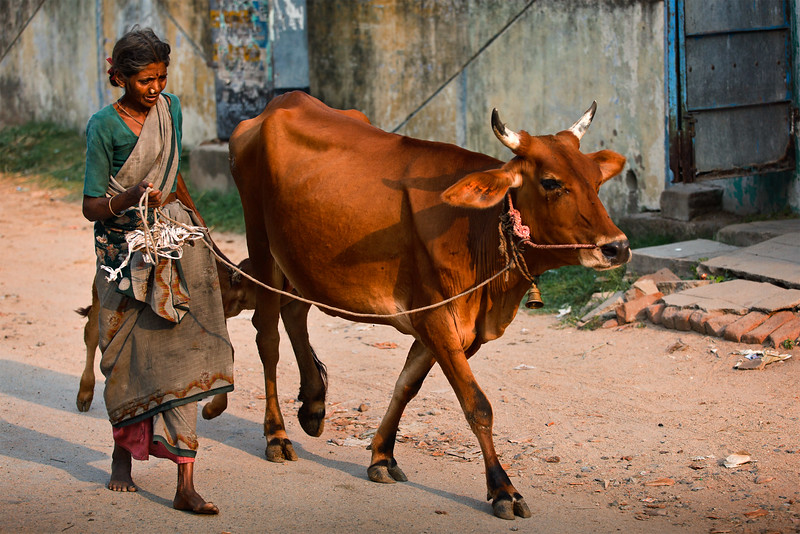 Old woman with cow