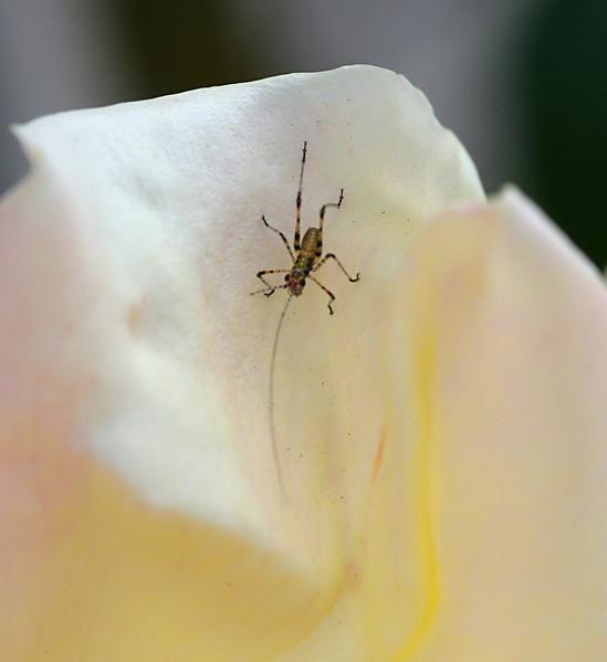 6980 Tiny Bug.jpg