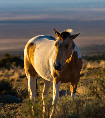 An Afternoon With Wild Mustangs