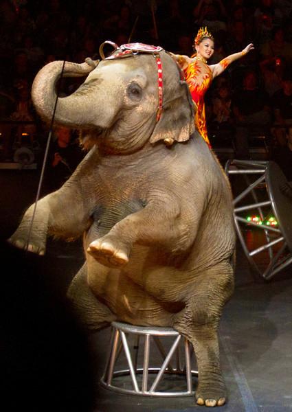elephantraringwithrider.jpg