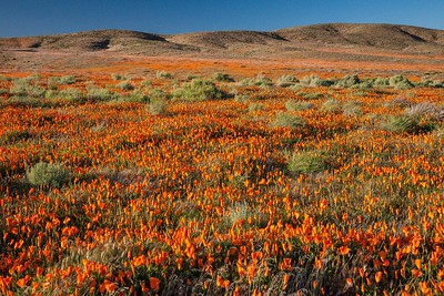 CA-Antelope Valley Poppy Preserve