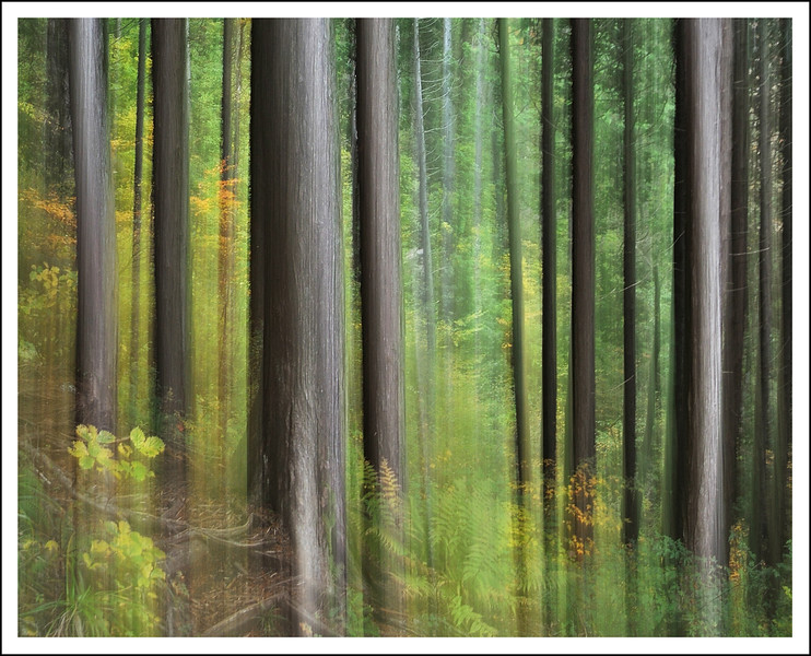 West Ashinoko.  Intentional camera movement.