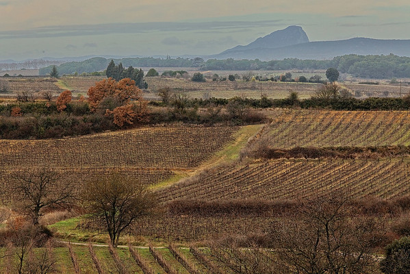 Paysages - Languedoc