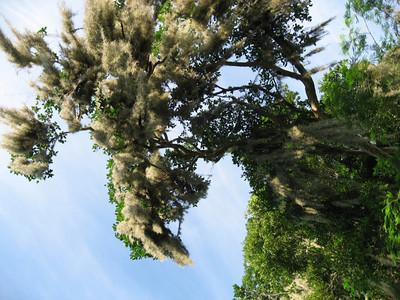 Reserva Biosfera el Cielo, Gomez Farias, Tamaulipas, Mexico