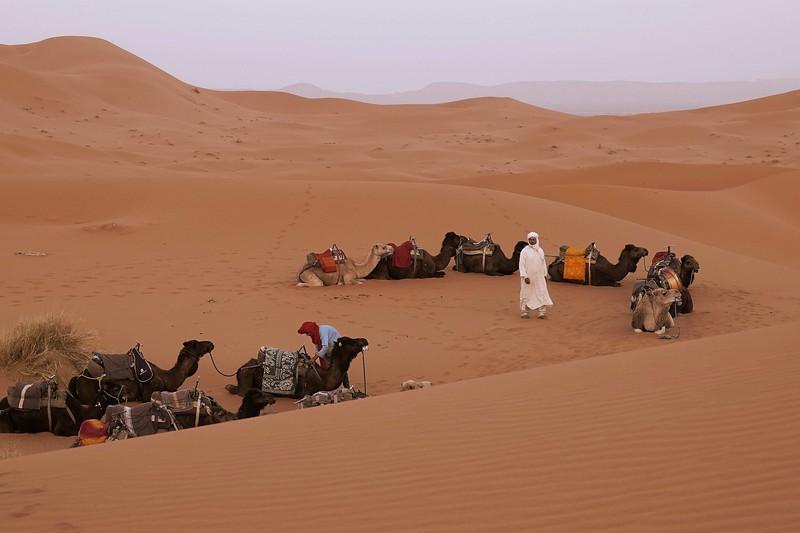 sahara desert morocco 2018 copy3.jpg