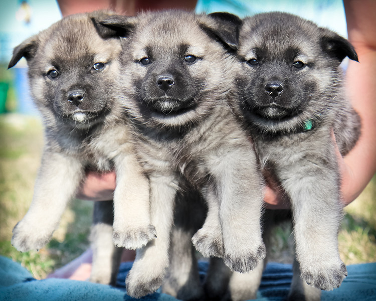 2014-03-30 5 week old pups
