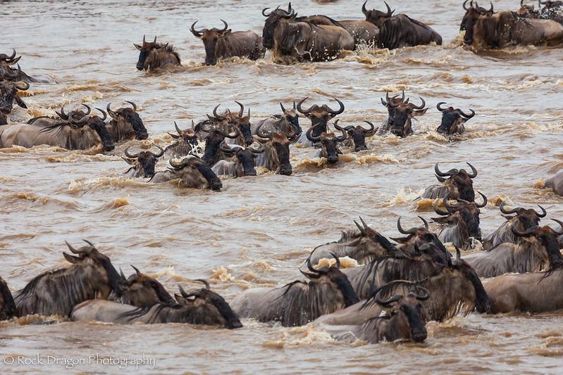 North_Serengeti-62.jpg