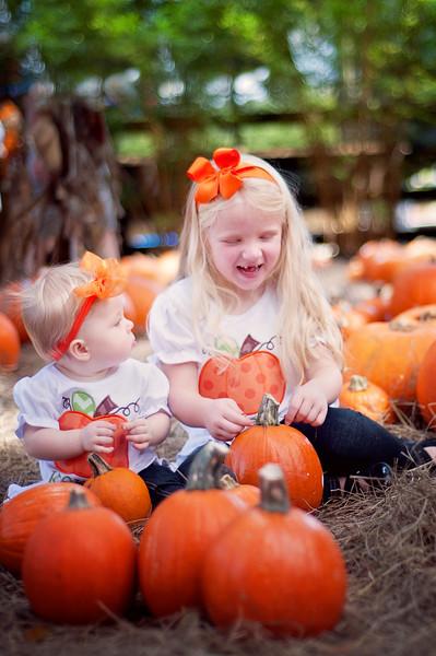 Pumpkin Patch mini - Stewart