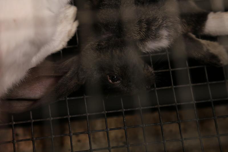 006-lapins-mortalité-france-2012-2013.jpg