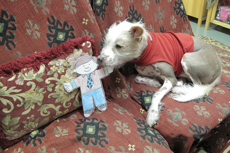Flat Stanley and Spike, the Mexican Xolo dog at Fat Chance Belly Dance.