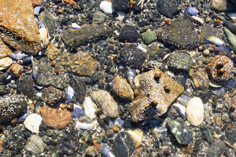 Maine-Acadia-shoreline-rocks10.jpg