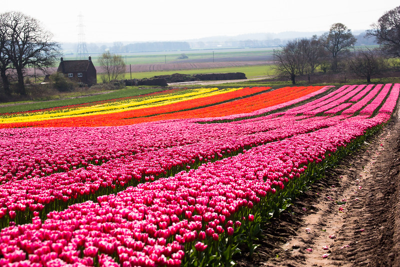 524 Beauty of Spring.jpg