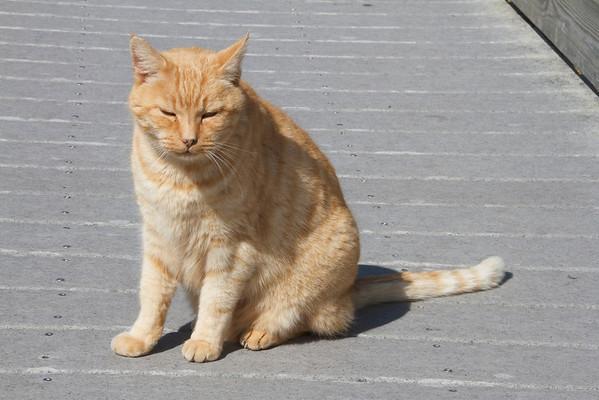 Ocracoke Lighthouse Kitty