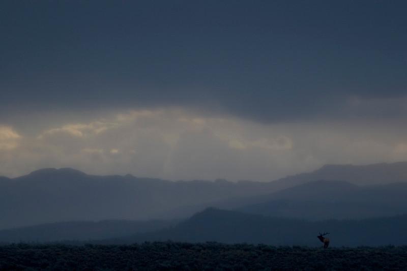 elk-rain1.jpg