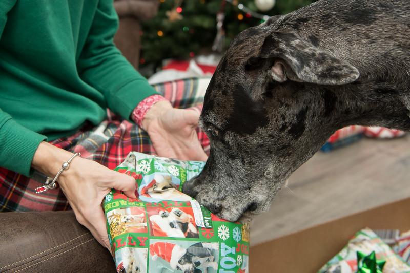 Doggy Christmas0003.jpg