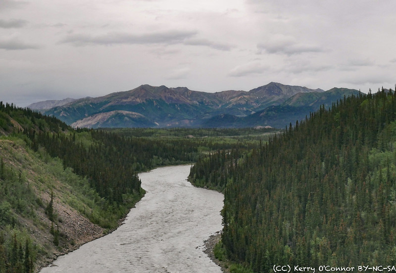 View from the train to Denali