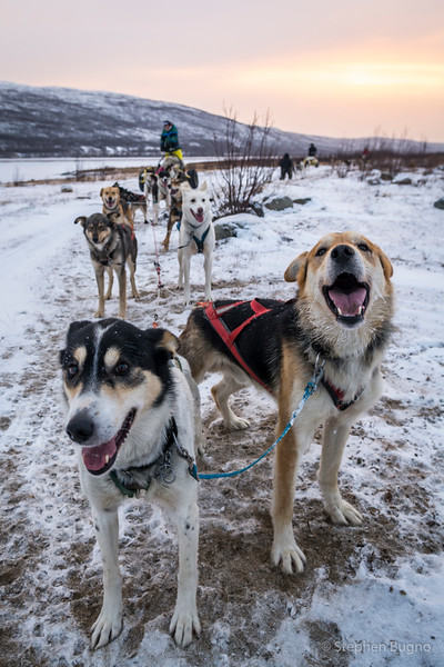 Dog Mushing-9816.jpg