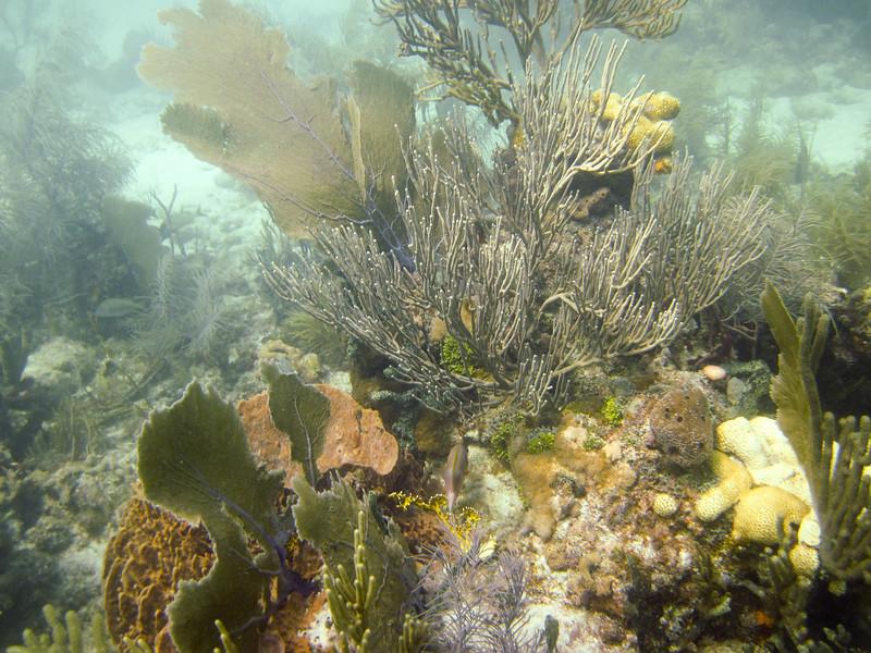 islamorada-diving-67.jpg