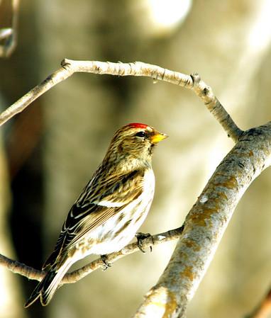 march 2008 birds