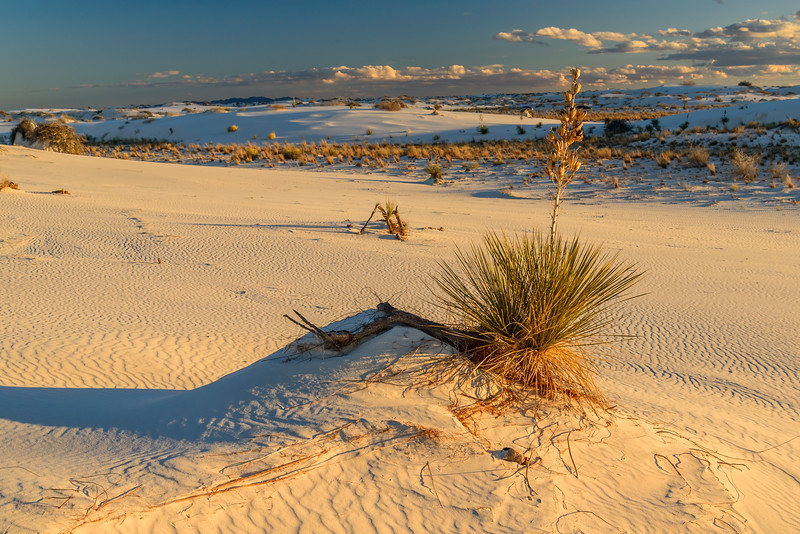 023.Larry Leach.1.White Sands.AS.jpg
