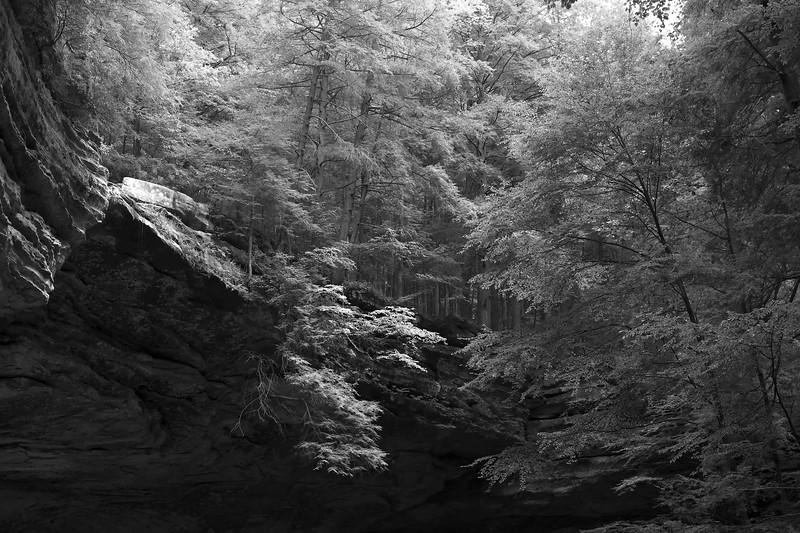 Ash Cave 20x30.jpg