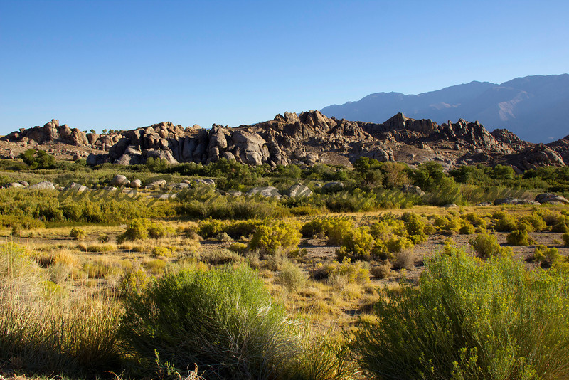 Sagebrush and Alabama Hills