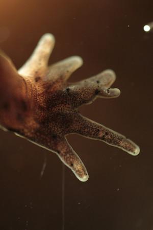 011 Mole salamander