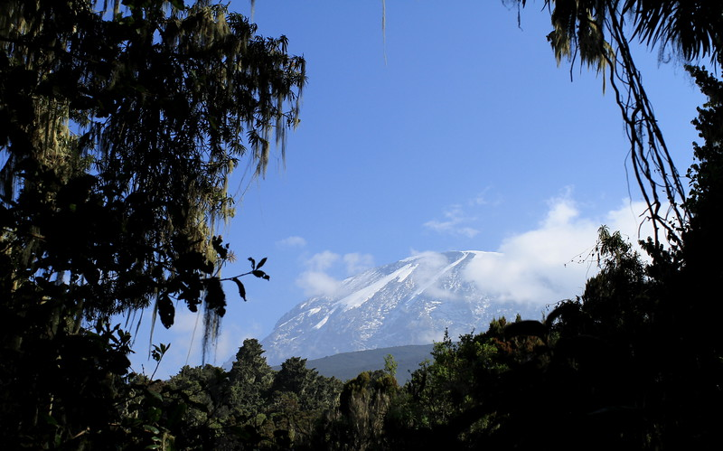 Last views of Kilimanjaro from the track