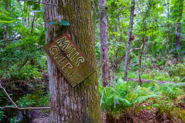 Mills Creek Woodland