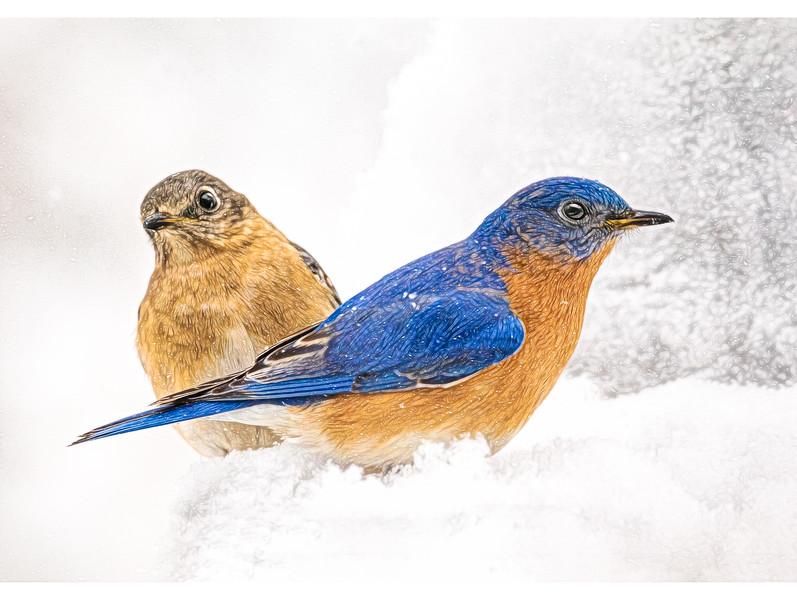 JWS_4430-MFHAPPYHOLIDAYSblue birds2018.jpg
