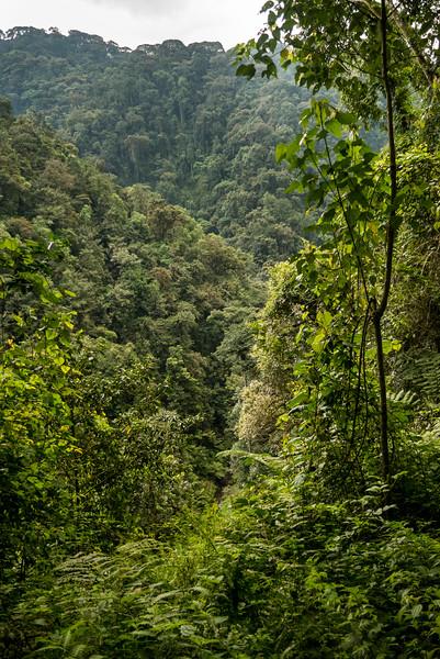 Nyugwe-Rwanda-30.jpg