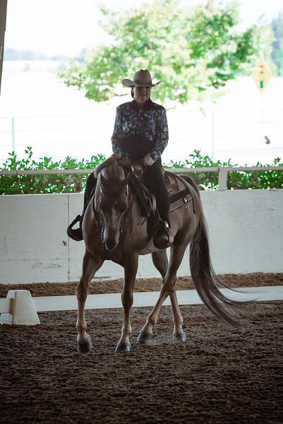 Morgan Horse Images