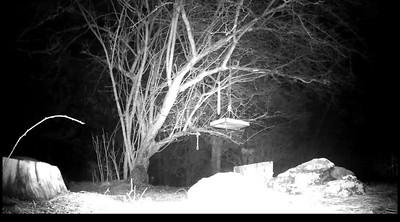 Trail Camera Scavenger Hunt