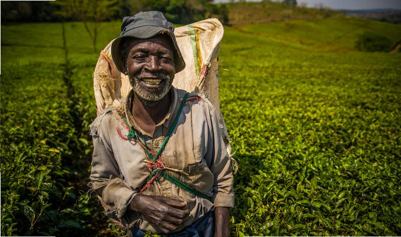 Tea Planter.jpg