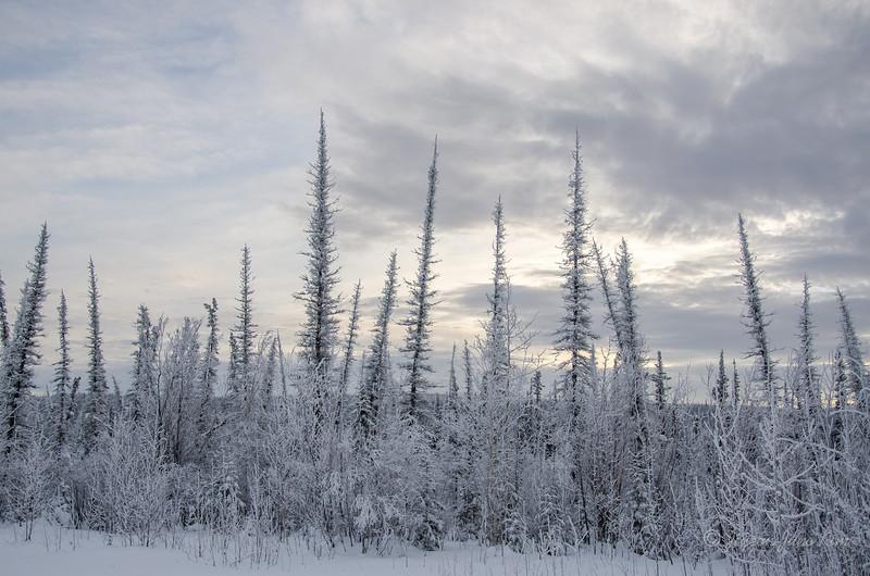 USA-Alaska-Arctic-Circle-2559.jpg