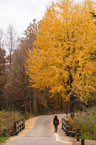 Autumn stroll