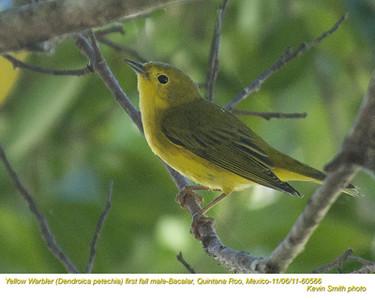 YellowWarblerM60566.jpg