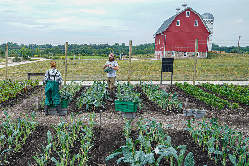 Arboretum, July Harvest-55.JPG