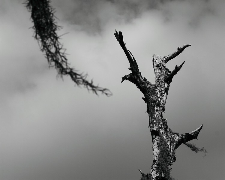 Death in the Wind