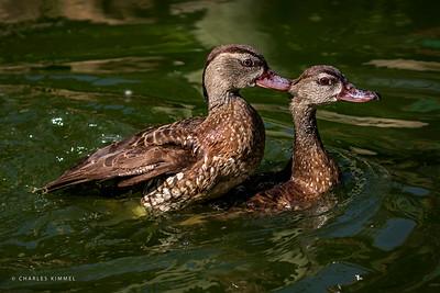 Duck: 2020