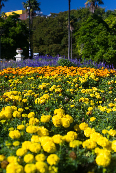 Flowers at Albert Park, Auckland