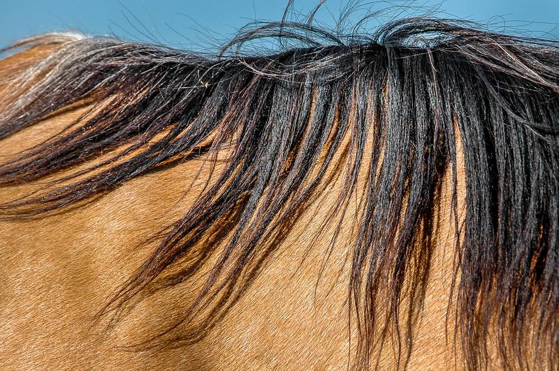 Wild Horse Mane #1