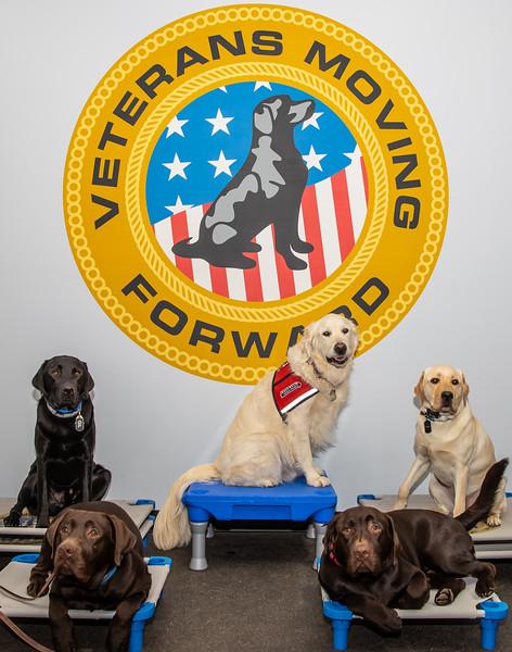 Dogs (145 of 282).jpg