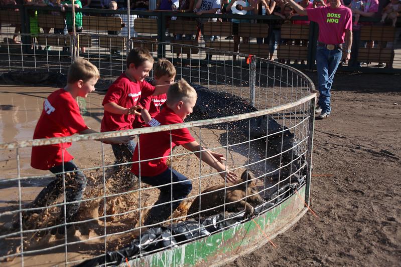 Havre Daily News / Floyd Brandt  Pig Wrestling at Blain County Fair Sunday team Golden Bell Bulls