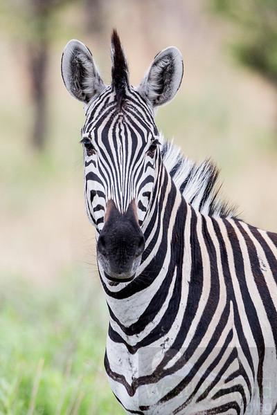 Botswana-20121130-5292.jpg