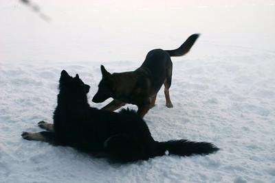 Kobie and Brita - Snow Dogs