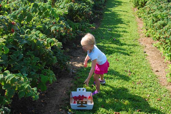 Berry Picking at Milburn