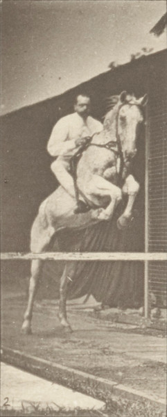 Horse Pandora jumping a hurdle, saddled with a rider, clearing, landing and knocking over the hurdle